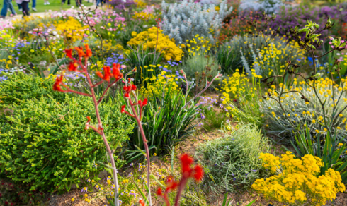 Colourful wildflowers found at Kings Park