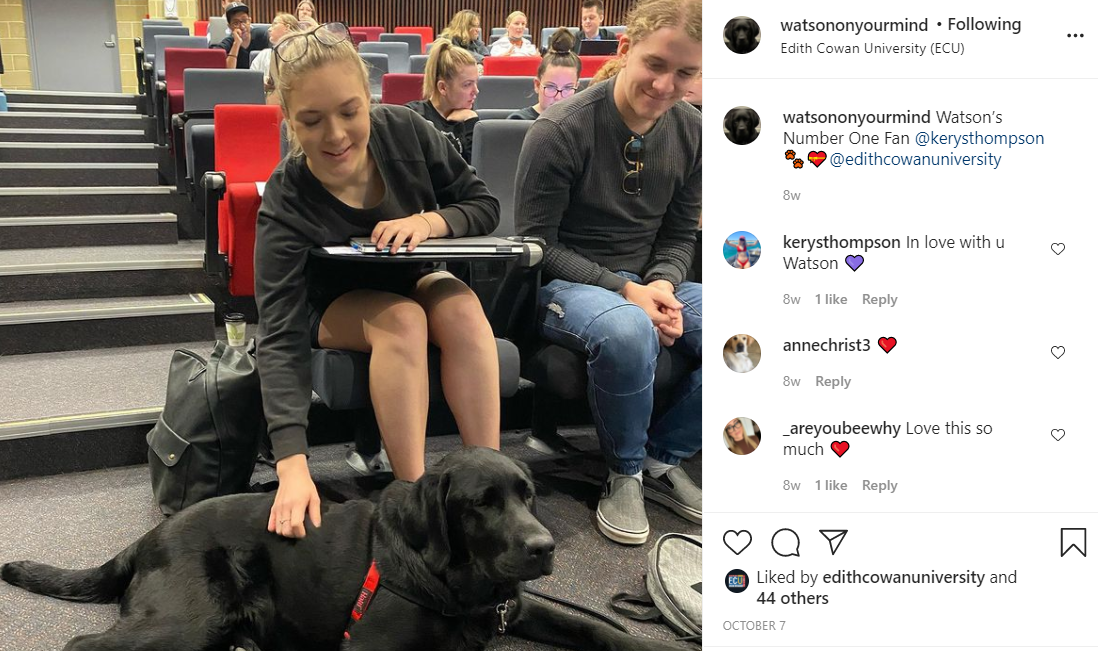 Watson hanging out in a lecture theatre with students giving a pat